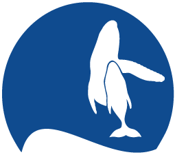A Kohola Whale Tales Sponsor 20000