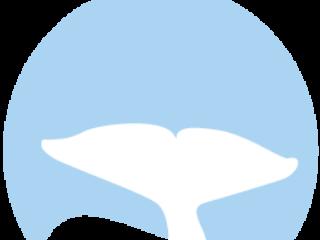 7 Orca Whale Whale Tales Sponsor 500