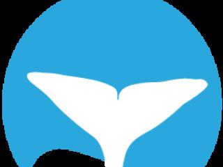 5 Sperm Whale Whale Tales Sponsor 3000
